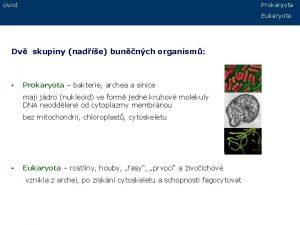 vod Prokaryota Eukaryota Dv skupiny nade bunnch organism