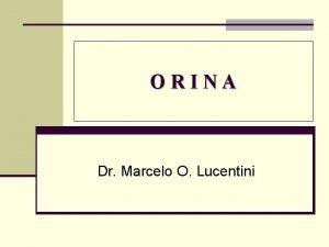 ORINA Dr Marcelo O Lucentini Qu es la