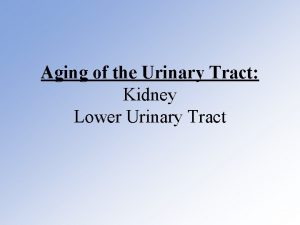 Aging of the Urinary Tract Kidney Lower Urinary