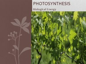 PHOTOSYNTHESIS Biological Energy Energy and Life AUTOTROPHS HETEROTROPHS
