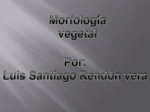Morfologa vegetal Por Luis Santiago Rendn vera morfologa