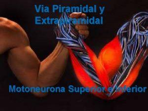 Via Piramidal y Extrapiramidal Motoneurona Superior e Inferior
