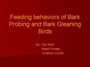 Feeding behaviors of Bark Probing and Bark Gleaning