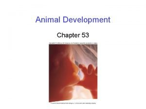 Animal Development Chapter 53 Fertilization In all sexuallyreproducing