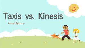 Taxis vs Kinesis Animal Behavior Kinesis nondirectional response