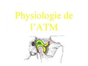 Physiologie de lATM Dpartement de Physiologie Paris V