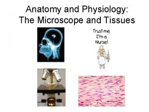 Anatomy and Physiology The Microscope and Tissues Calculation