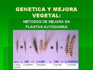 GENETICA Y MEJORA VEGETAL MTODOS DE MEJORA EN