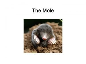 The Mole 1 dozen eggs 12 eggs 1