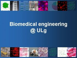 Biomedical engineering ULg 3 big questions What is
