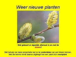 Weer nieuwe planten Wat gebeurt er eigenlijk allemaal