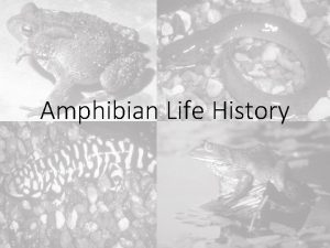 Amphibian Life History Amphibian Life History I III