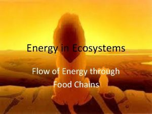Energy in Ecosystems Flow of Energy through Food
