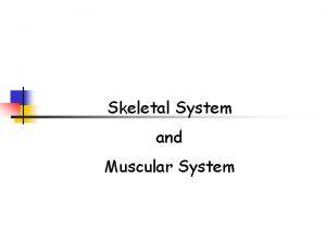 Skeletal System and Muscular System Skeletal System Function