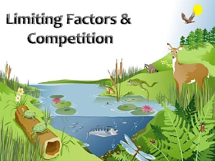 Limiting Factors Competition What are limiting factors Write