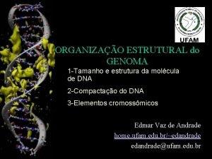 ORGANIZAO ESTRUTURAL do GENOMA 1 Tamanho e estrutura