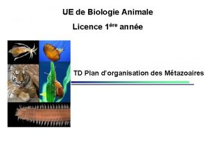 UE de Biologie Animale Licence 1re anne TD