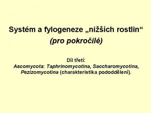 Systm a fylogeneze nich rostlin pro pokroil Dl