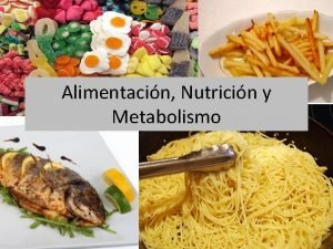 Alimentacin Nutricin y Metabolismo Qu nutrientes necesitamos incorporar