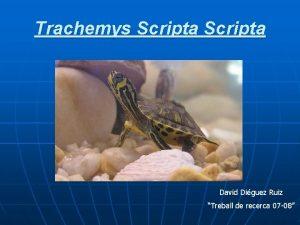 Trachemys Scripta David Diguez Ruiz Treball de recerca