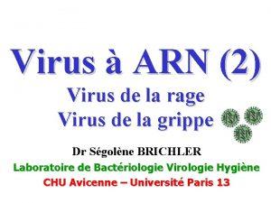 Virus ARN 2 Virus de la rage Virus