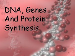 DNA Genes And Protein Synthesis 1 Purpose What