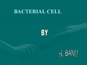 BACTERIAL CELL BACTERIAL CELL The illustration shows a