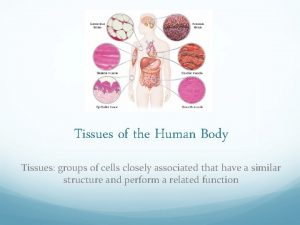 Tissues of the Human Body Tissues groups of