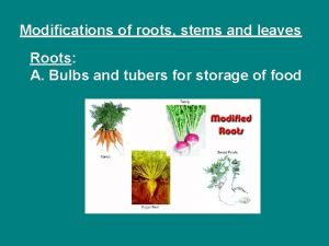 Modifications of roots stems and leaves Roots A