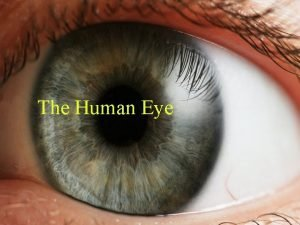 The Human Eye The Human Eye n Refractive