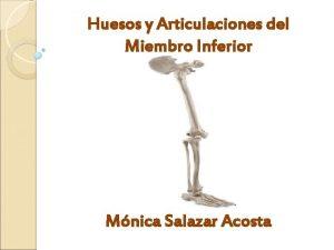 Huesos y Articulaciones del Miembro Inferior Mnica Salazar