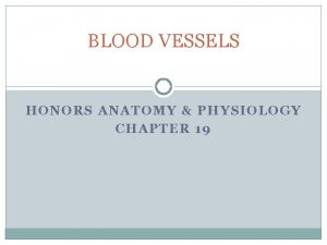 BLOOD VESSELS HONORS ANATOMY PHYSIOLOGY CHAPTER 19 BLOOD