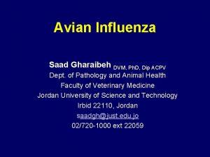 Avian Influenza Saad Gharaibeh DVM Ph D Dip