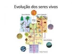 Evoluo dos seres vivos Reinos Monera Protista Fungi