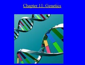 Chapter 11 Genetics Understanding Genetics the branch of