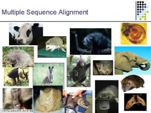 Multiple Sequence Alignment CS 273 a Lecture 910