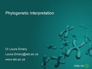 Phylogenetic Interpretation Dr Laura Emery Laura Emeryebi ac