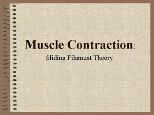 Muscle Contraction Sliding Filament Theory Sliding Filament Theory