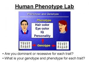 Human Phenotype Lab Are you dominant or recessive