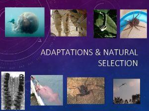 ADAPTATIONS NATURAL SELECTION NICHE A habitat supplying factors