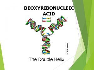 DEOXYRIBONUCLEIC ACID The Double Helix Why does DNA