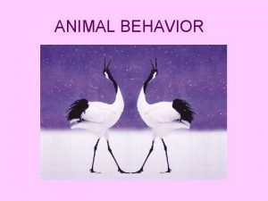 ANIMAL BEHAVIOR Behavior What is it q Behavior