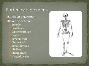 Botten van de mens Skelet of geraamte Bekende