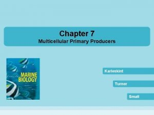 Chapter 7 Multicellular Primary Producers Karleskint Turner Small