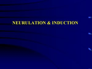 NEURULATION INDUCTION Neural plate stage http www lawrence