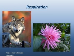 Respiration Photos from wikimedia commons Biodiversity and interdependence