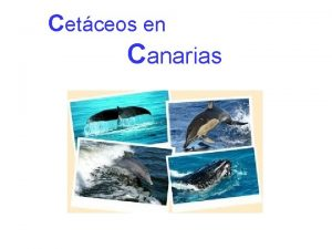 Cetceos en Canarias El orden de los cetceos