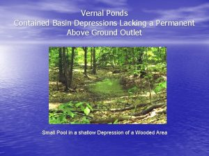 Vernal Ponds Contained Basin Depressions Lacking a Permanent