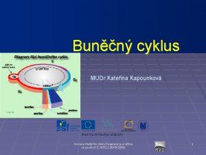 Bunn cyklus MUDr Kateina Kapounkov Inovace studijnho oboru