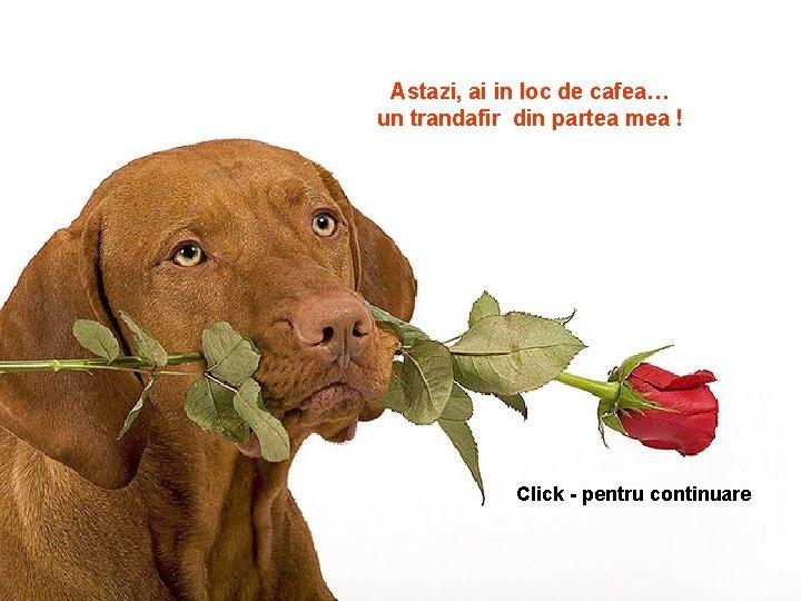 Astazi ai in loc de cafea un trandafir